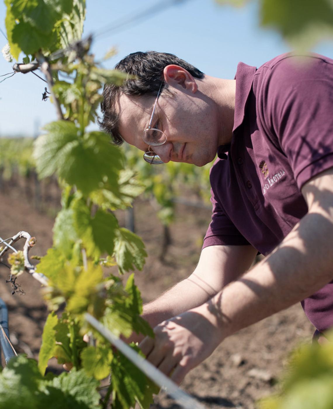 luigi-di-tuccio-antica-enotria vino e conserve biologiche di puglia