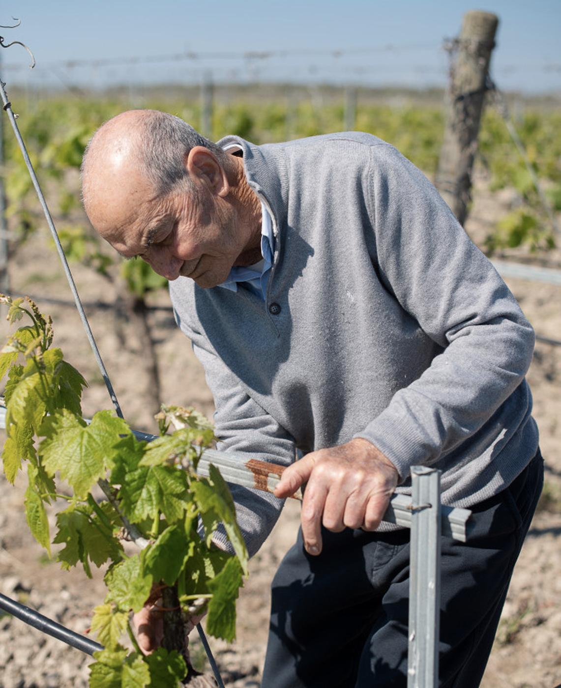 raffaele-di-tuccio-antica-enotria vino e conserve biologiche