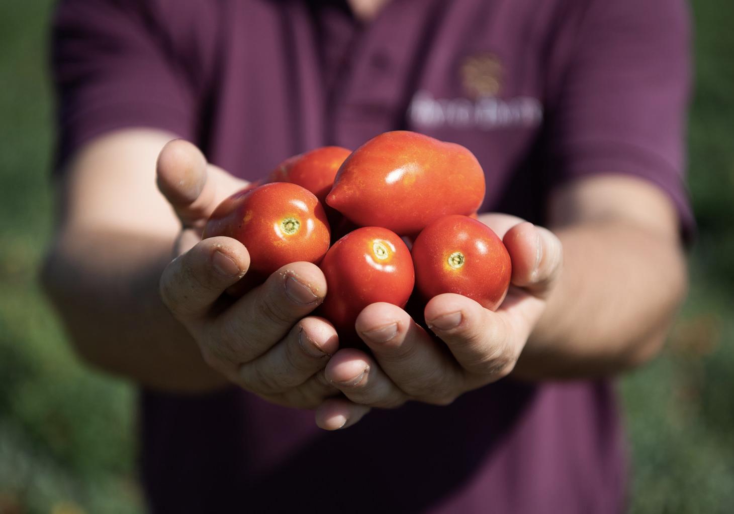 I nostri pomodori biologici