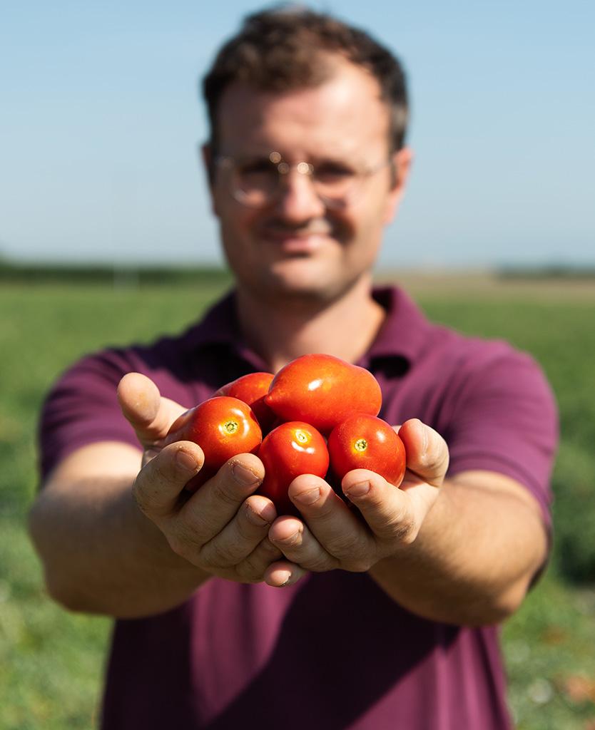 pomodori puglia antica enotria
