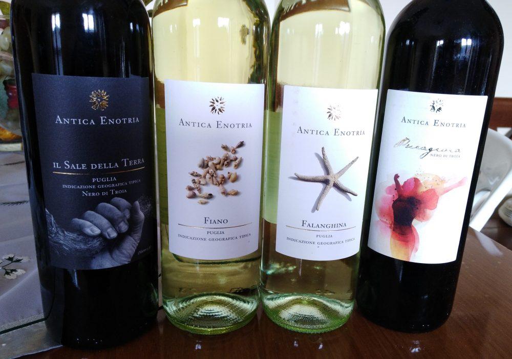 Vini Antica Enotria – Nuove annate