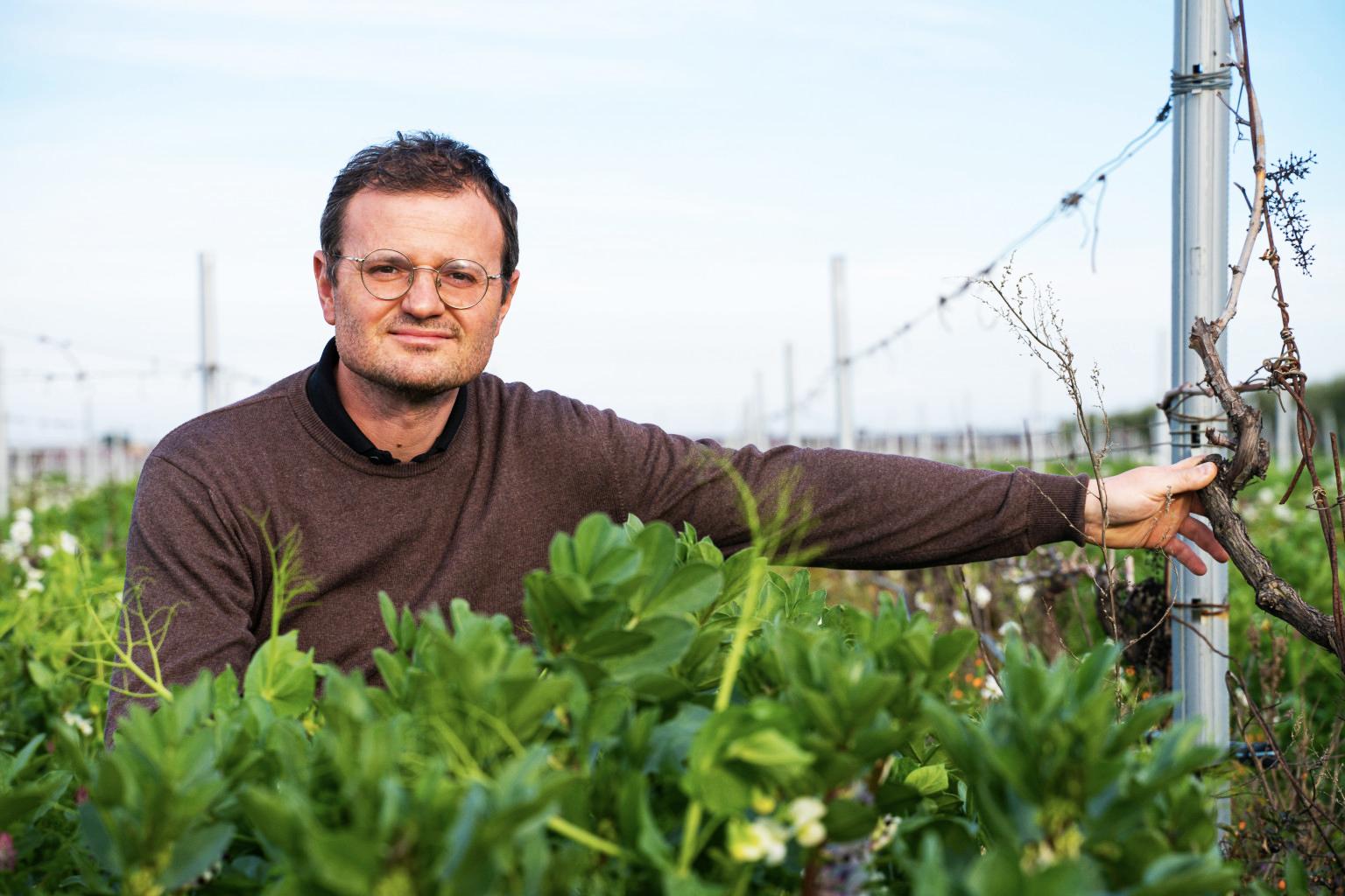 La rigenerazione delle vigne